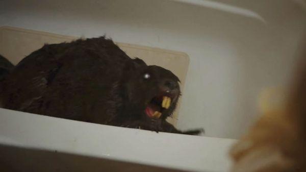 Beaver 1