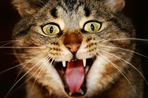 Cat Scare