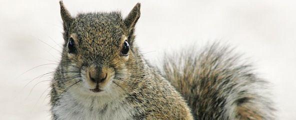 Poltergeist Squirrel