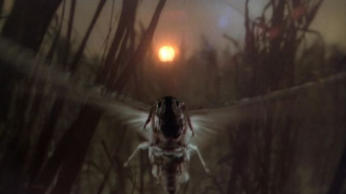 The Exorcist II Locust