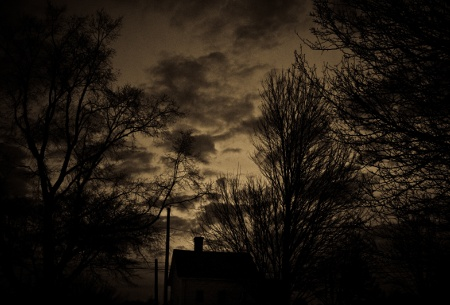 Dark Was the Night Trees
