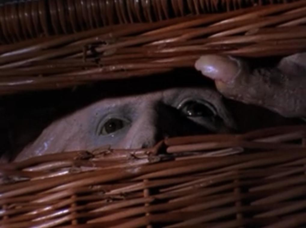 Basket Case Pic 1