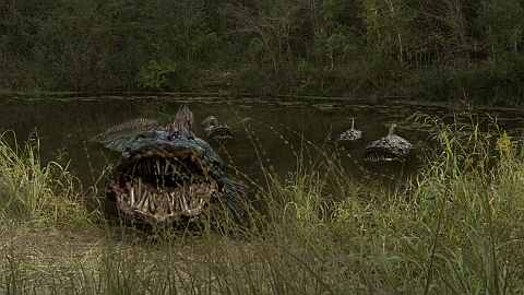 SnakeHead Swamp Pic 1