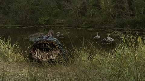 SnakeHead Swamp Pic 1