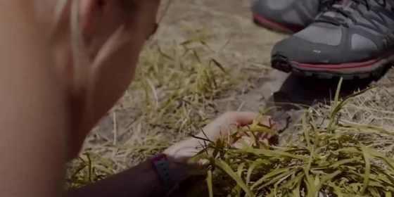 landmine-goes-click-pic-4